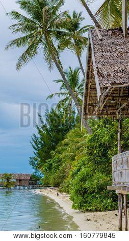 Coconut Palms near Diving Station on Kri Island, Raja Ampat, Indonesia, West Papua.