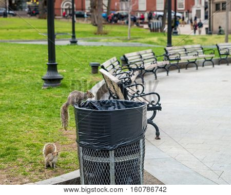 Squirrels At Boston Common Public Park In Downtown Boston