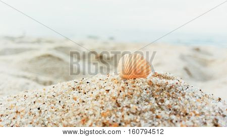Landscape with seashell on european beach close up