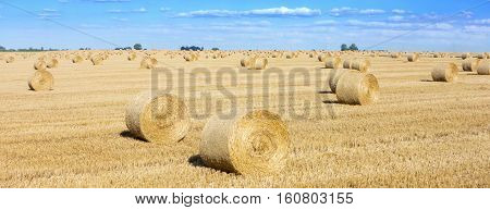 Rolls of hay in a field this is typical view at harvest time
