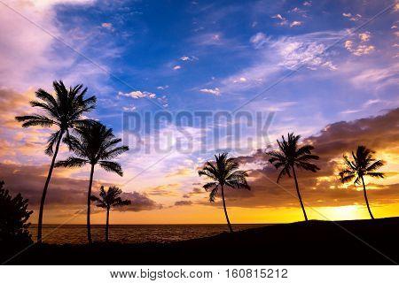 Tropical Hawaiian sunset with palm tree silhouettes