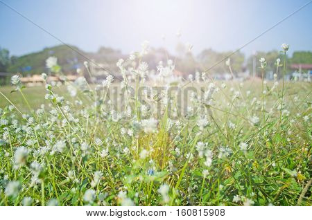 The flowers that grow on the field