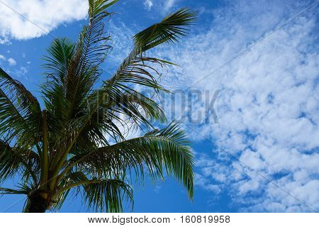coconut tree against the blue sky daytime