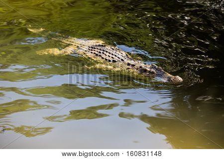 water bodies on the Crocodile Farm in Dalat. Vietnam.