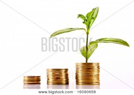 Coins and green plant isolated on white