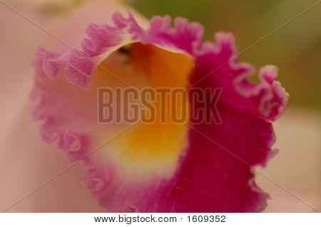 Inside Flower1