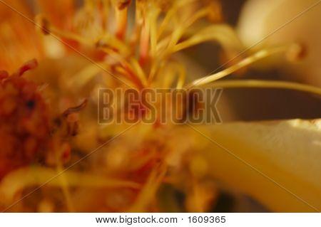 Inside Flower10