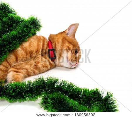 Tired Red-headed Kitten Lying On Its Side In Christmas Tinsel And Looking Away