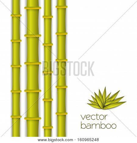 Bamboo bright stems green and leaf summer background tropical illustration