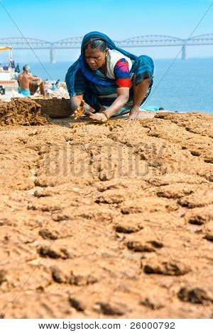 VARANASI, INDIA - FEBRUARY 10: Woman making cow dung cakes  on a bank of sacred river Ganges on February 10, 2008 in Varanasi, Uttar Pradesh, India.