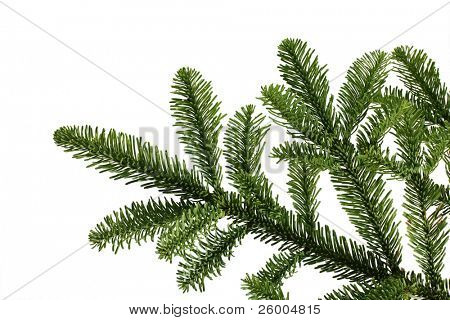 Christmas tree,Abies