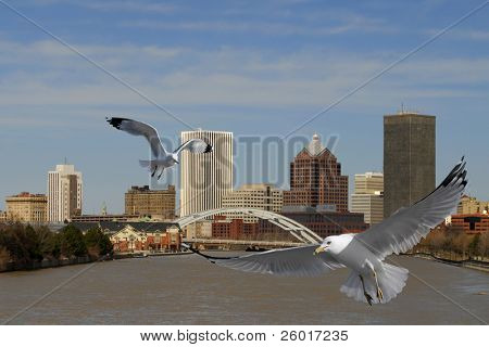 Two flying gulls in front of a city skyline.