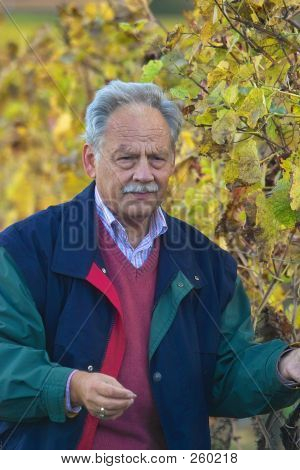 Mature Winemaker