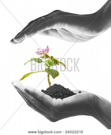 只手握住绿色的植物与花