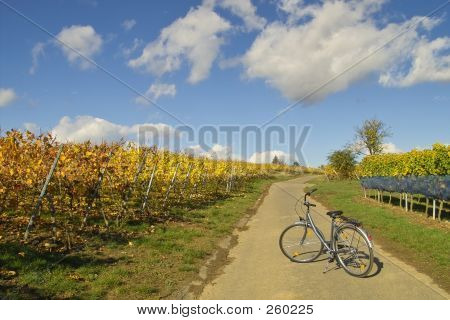 Bicycle In Wineyards