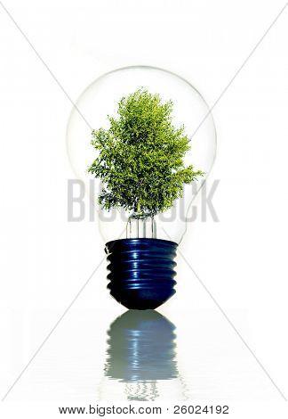 Árbol de la bombilla que simboliza la energía verde