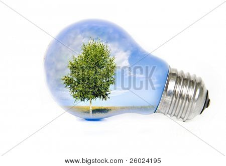 Summer landscape with tree in light bulb symbolizing green energy