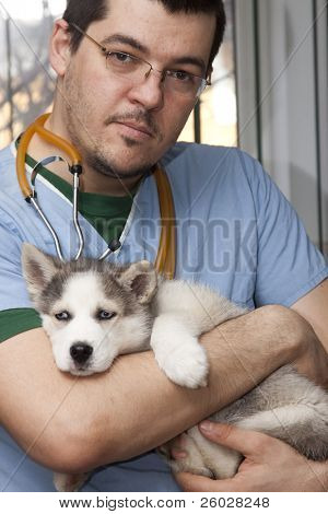 Vet examining husky puppy at a small animal clinic