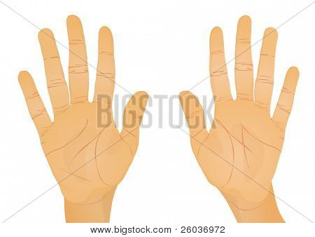 Two realistic hand. Vector illustration