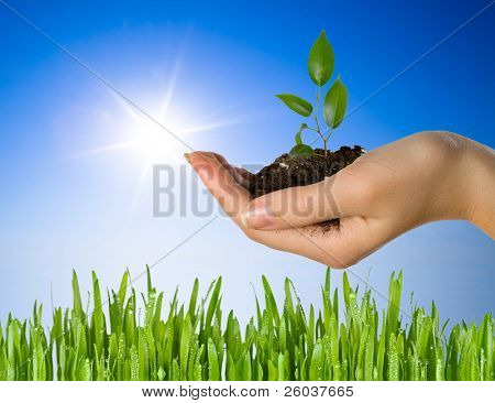 Hand with a plant  and green grass
