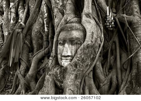 stone budda head traped in the tree roots ayttaya thailand