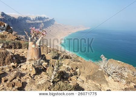 Bottle tree - adenium obesum â?? endemic tree of Socotra Island with turquoise sea water background at Socotra Island