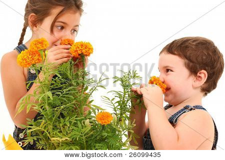 Attractive 3 and 5 year old brother and sister sniffing marigold flower over white background.