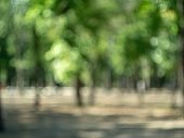 Blurred View Of Park. Defocused Image Of Summer Garden With Effect Of Bokeh. Blur Effect On Abstract poster