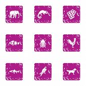 African Wildlife Icons Set. Grunge Set Of 9 African Wildlife Icons For Web Isolated On White Backgro poster