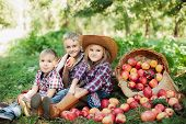 Children With Apple In The Apple Orchard. Child Eating Organic Apple In The Orchard. Harvest Concept poster