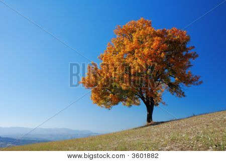 Bright Fall Tree