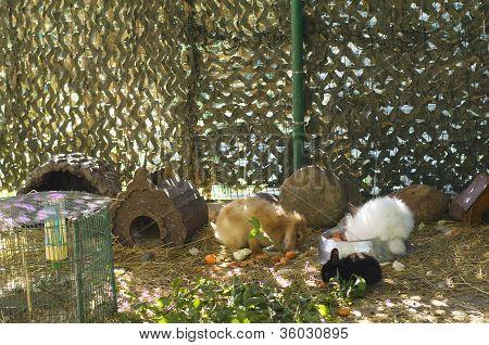 Rabbits Resting