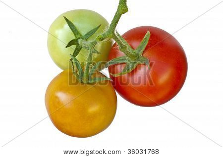 Tomato Ripe And Unripe Fruits