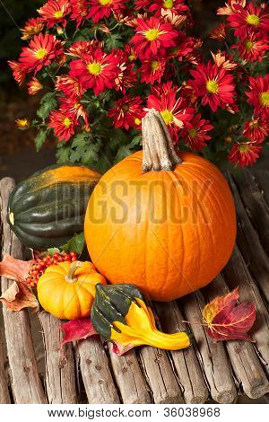 Colorful Still Life Of Squash And Flowers On A Rustic Table