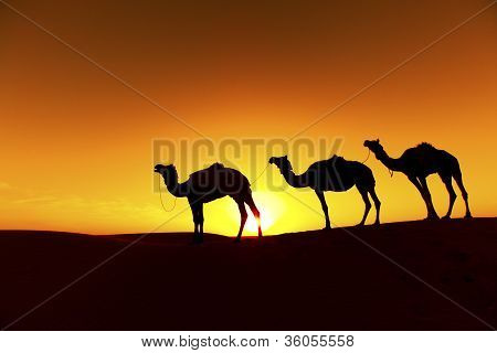 Camel train desert silhouette
