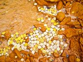 picture of colorado high country  - Yellow aspen leaves float in muddy river in Fall - JPG