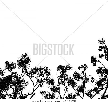 Black Tree Branches Silhouettes