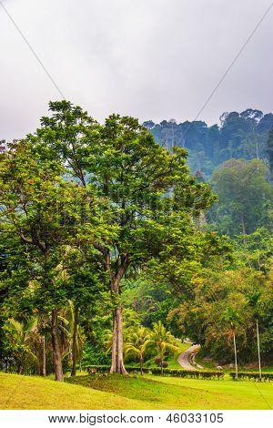 View on foggy jungle. Island Tioman. Malaysia