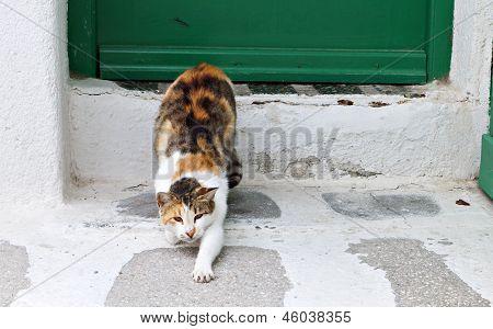Lazy cat at Mykonos island
