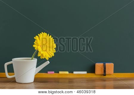 A blackboard and gerbera