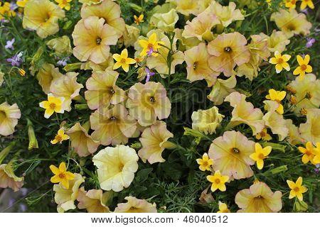Golden yellow wildflowers