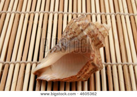 Shell On Mat