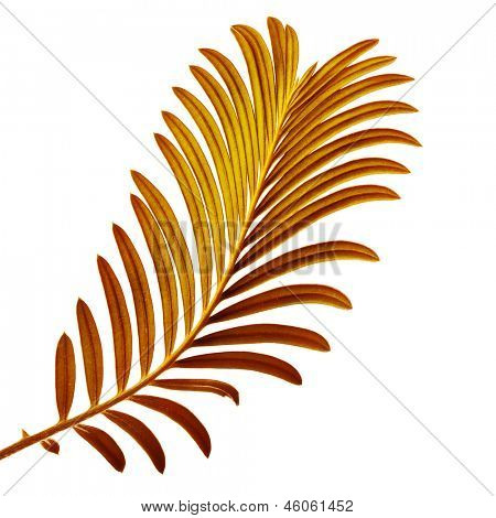 Colored Palm Leaf  isolated on white background