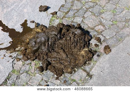 Horse Droppings On Cobblestones