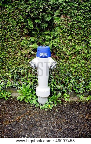 Fire hydrant in front of bush