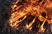 image of inflamed  - body of flame inflaming in the grass - JPG