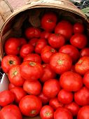 picture of farmers market vegetables  - tomatoes for sale at farmer - JPG
