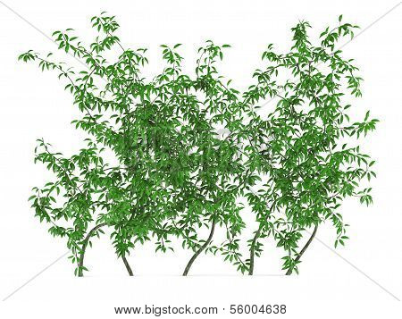 Green wall bush