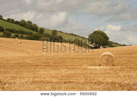 straw left on irish fields