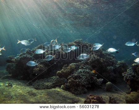 Dusk diving
